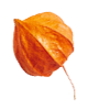 http://www.elevatedlux.com/wp-content/uploads/2020/11/small_leaf_04-2.png
