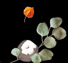 http://www.elevatedlux.com/wp-content/uploads/2020/12/floating_image_flower_02-2.png