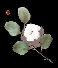 http://www.elevatedlux.com/wp-content/uploads/2020/12/floating_image_flower_03-2.png