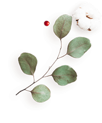http://www.elevatedlux.com/wp-content/uploads/2020/12/floating_image_flower_04-2.png